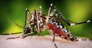 Zika FAQ